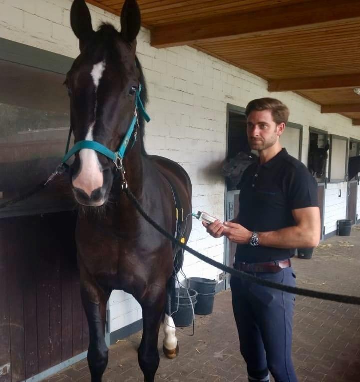 TimeWaver Home Behandlung für Sportpferde