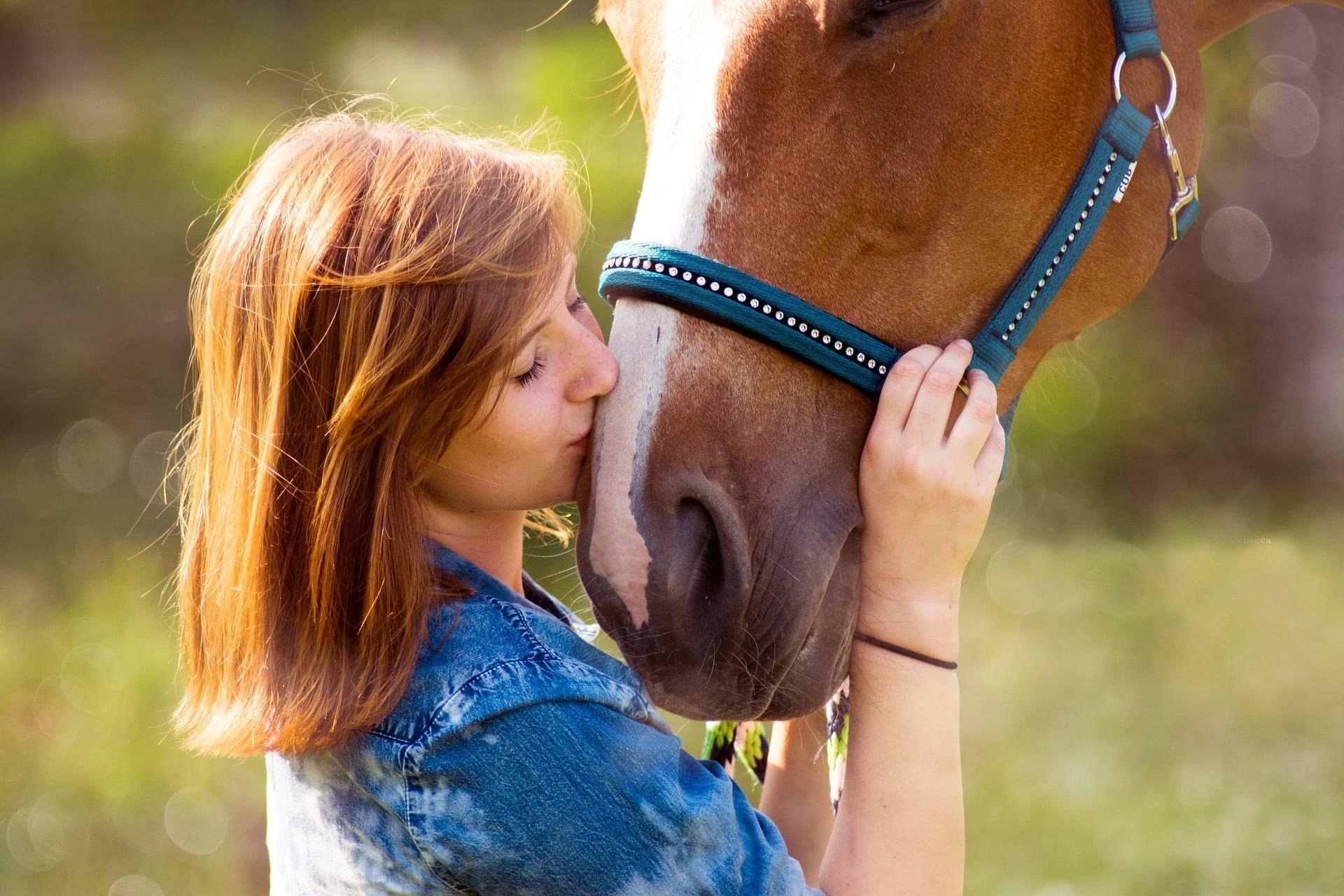 Was tun, wenn das Pferd krank ist und nichts mehr hilft.